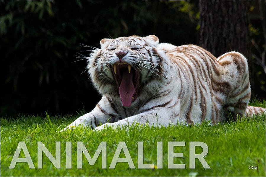Galerie Wildlife