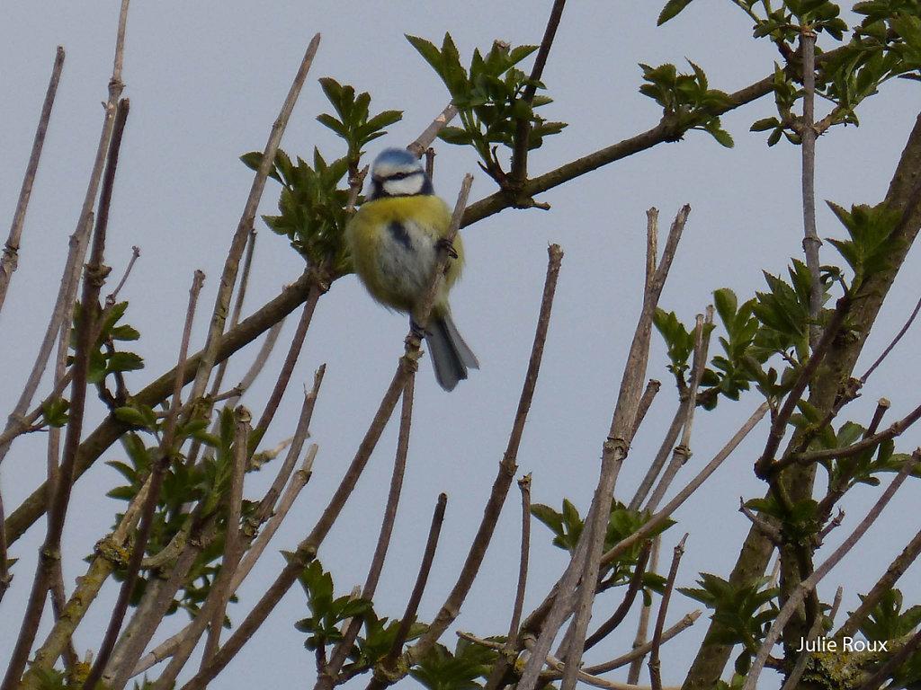Julie - L'oiseau sur la branche